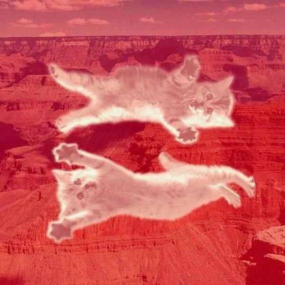 equal cat