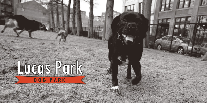 Frenchtown Dog Park St Louis Mo