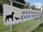 dp maplewood