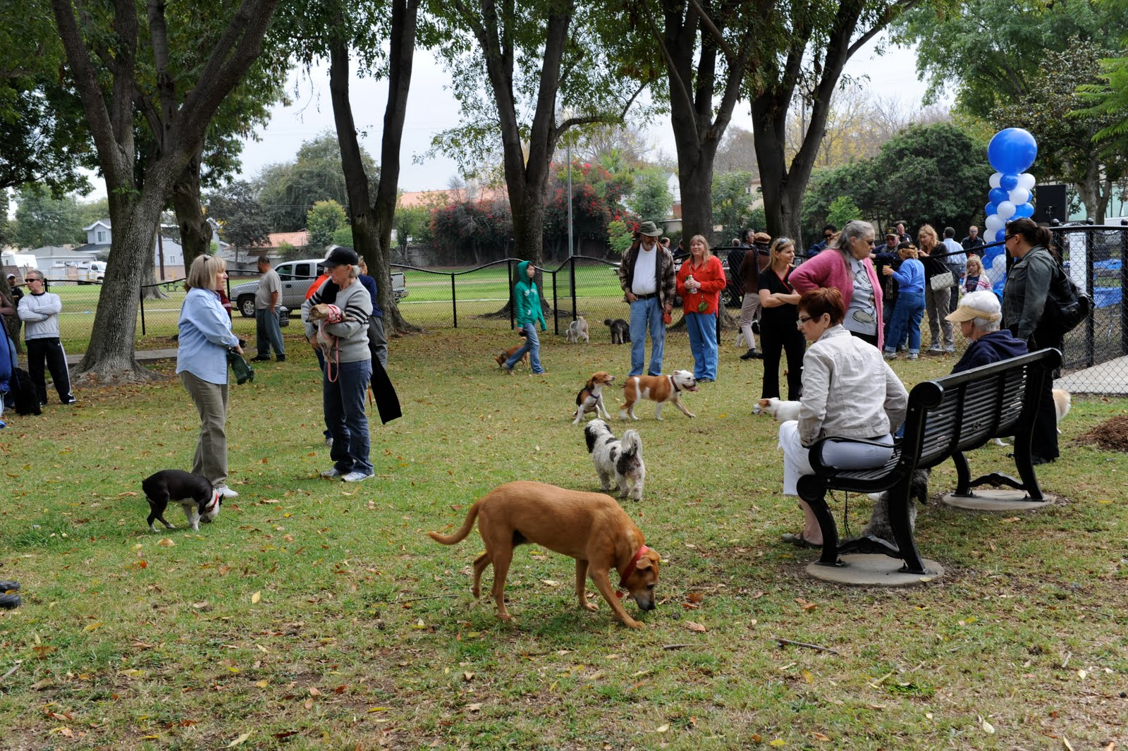 dog park Dog park rules dog owners/handlers are personally and legally responsible for their animals you are using these facilities at your own risk dogs may be off a leash only within the designated fenced area.