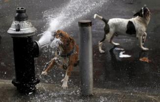 hot hydrant